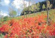 富士見ヶ原