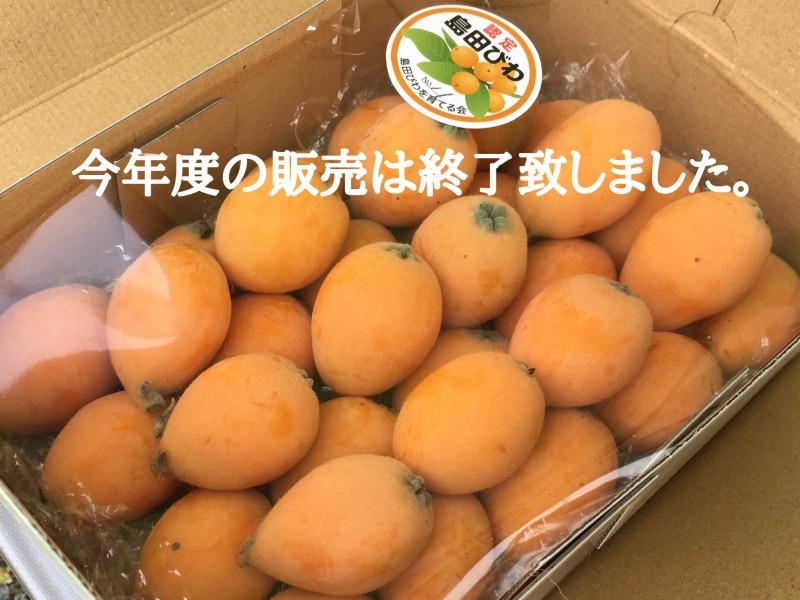 島田びわの予約販売について ※販売は終了致しました。