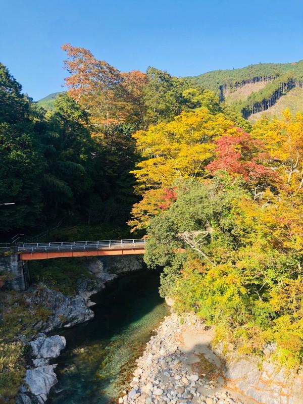 波瀬植物園周辺紅葉 (2)