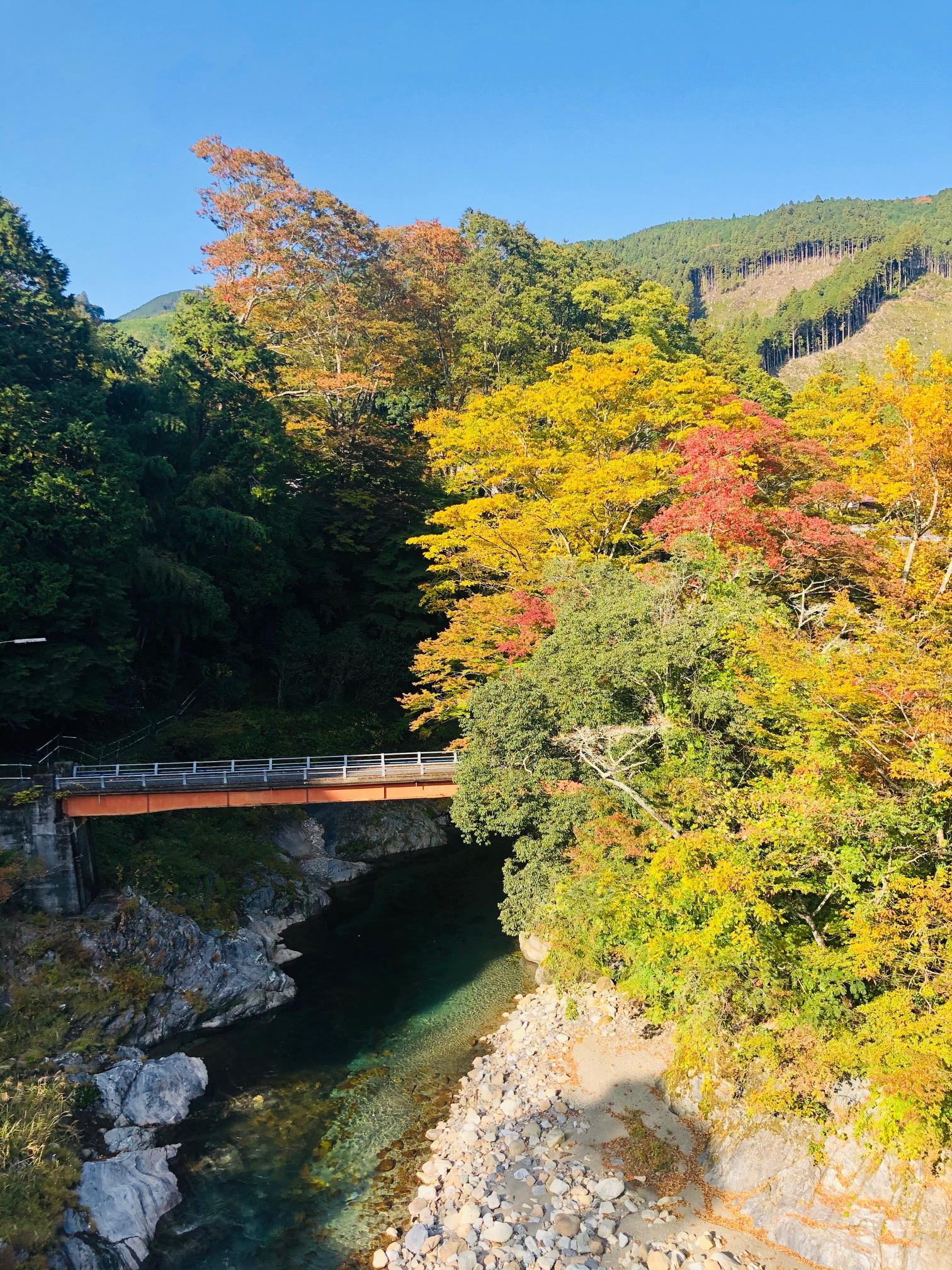 飯高町 波瀬植物園周辺 紅葉状況