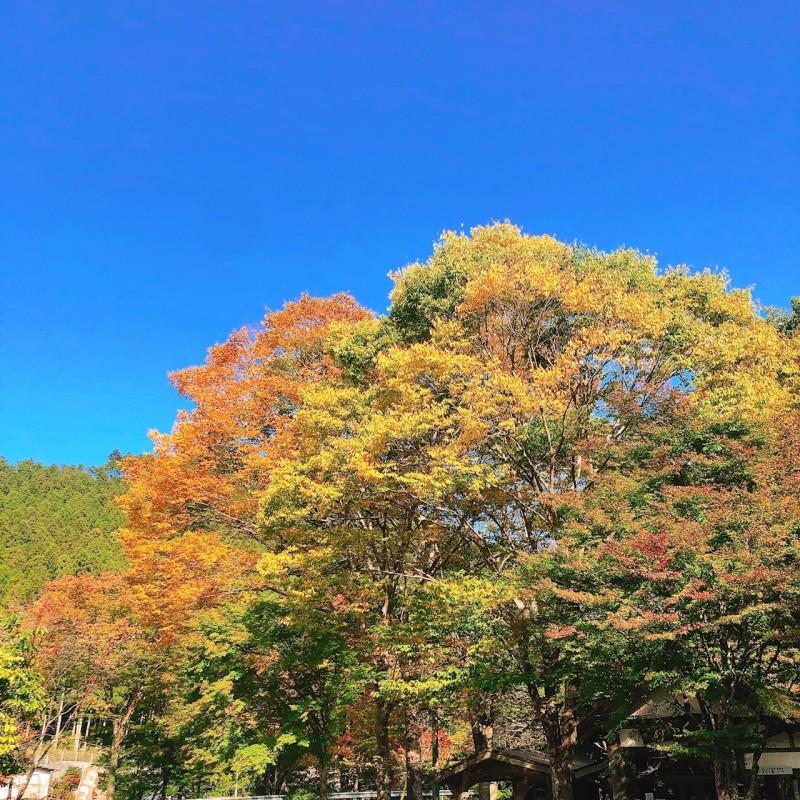 波瀬植物園周辺紅葉 (4)