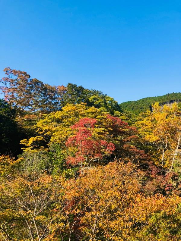 波瀬植物園周辺紅葉 (3)