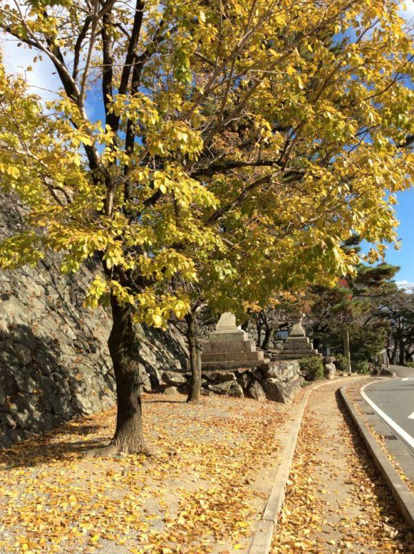 松坂城跡(松阪公園) 紅葉状況 2020/11/21