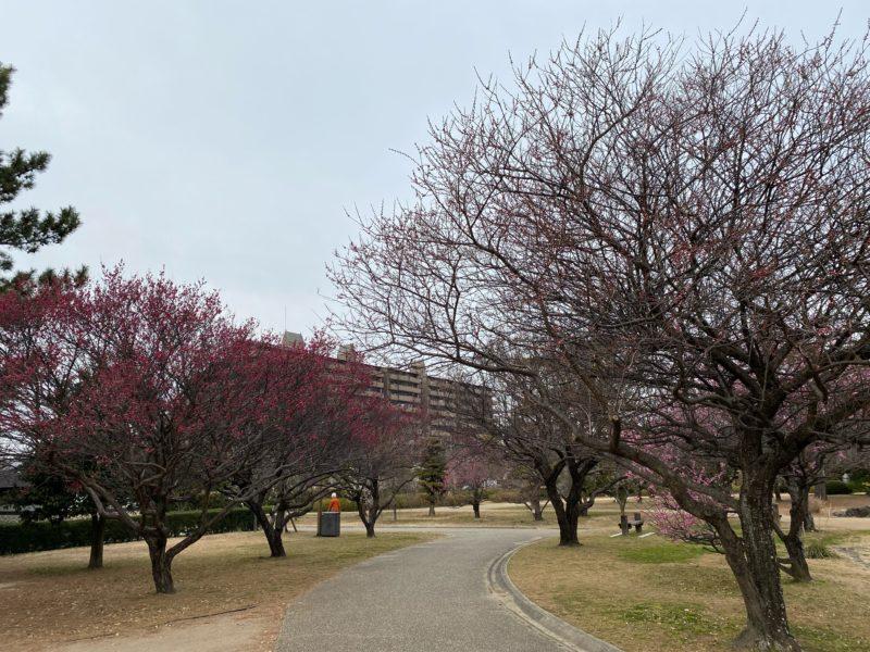 2021年2月12日(金)鈴の森公園  梅開花状況