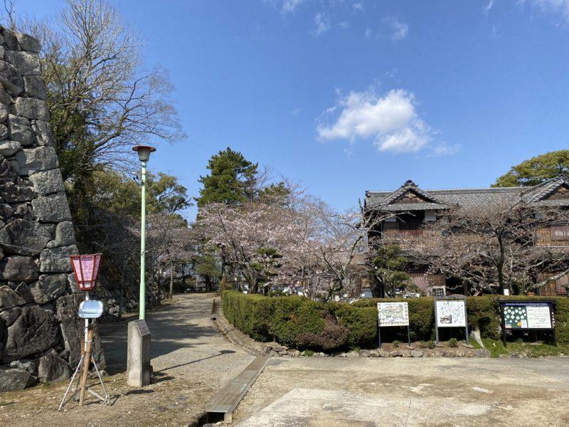 松阪市内 桜開花状況【令和3年3月23日現在】
