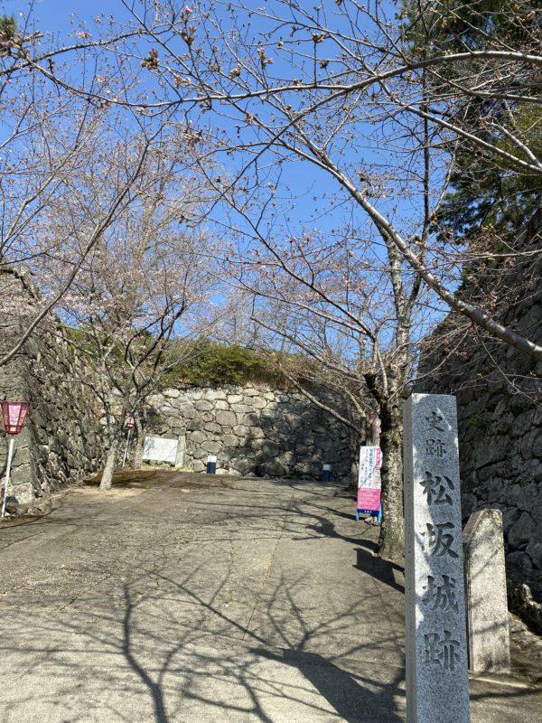 松阪市内 桜開花状況【令和3年3月24日現在】
