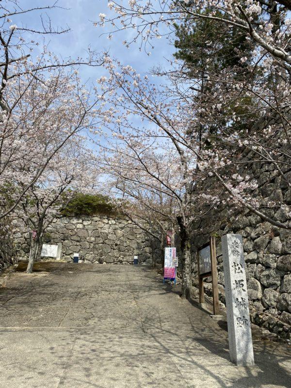 松阪市内 桜開花状況【令和3年3月27日現在】