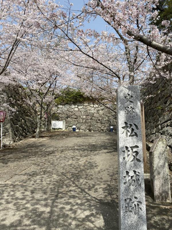 松阪市内 桜開花状況【令和3年3月30日現在】