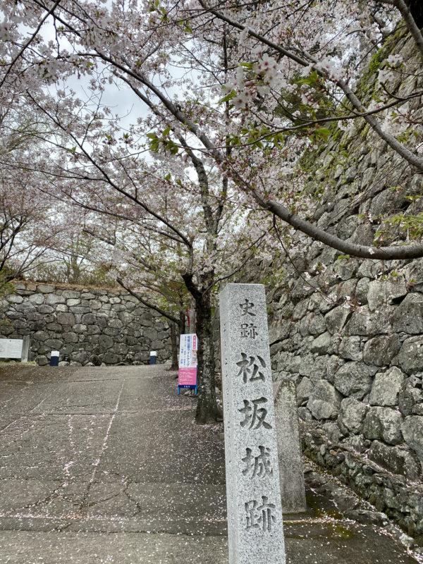 松阪市内 桜開花状況【令和3年4月5日現在】