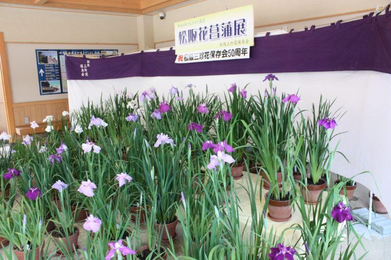令和3年6月9日(水)~13日(日)まで「松阪花菖蒲展」開催中!